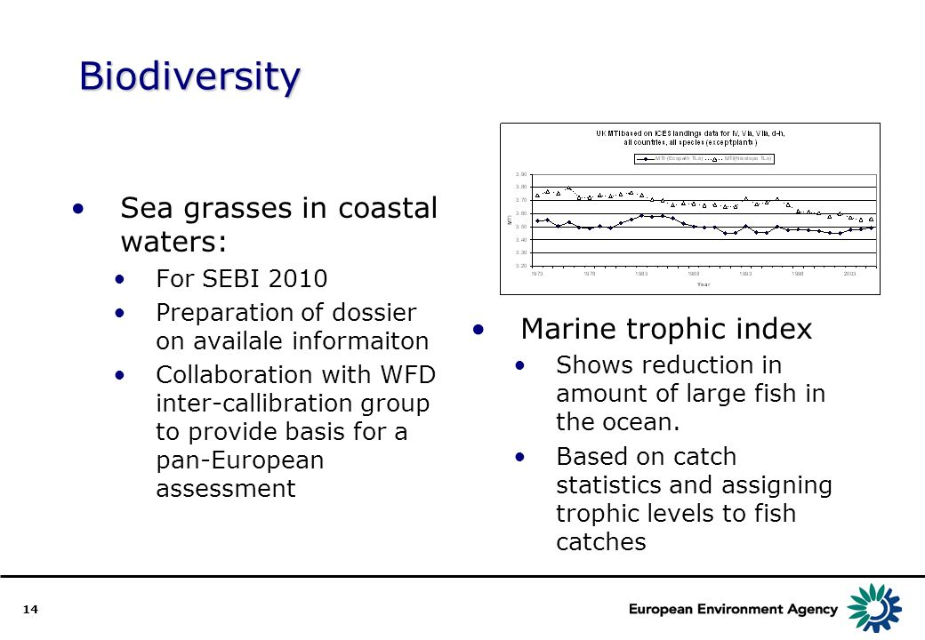 14 Biodiversity Sea grasses in coastal waters: For SEBI 2010 Preparation of dossier on availale informaiton Collaboration with WFD inter-callibration group to provide basis for a pan-European assessment Marine trophic index Shows reduction in amount of large fish in the ocean.