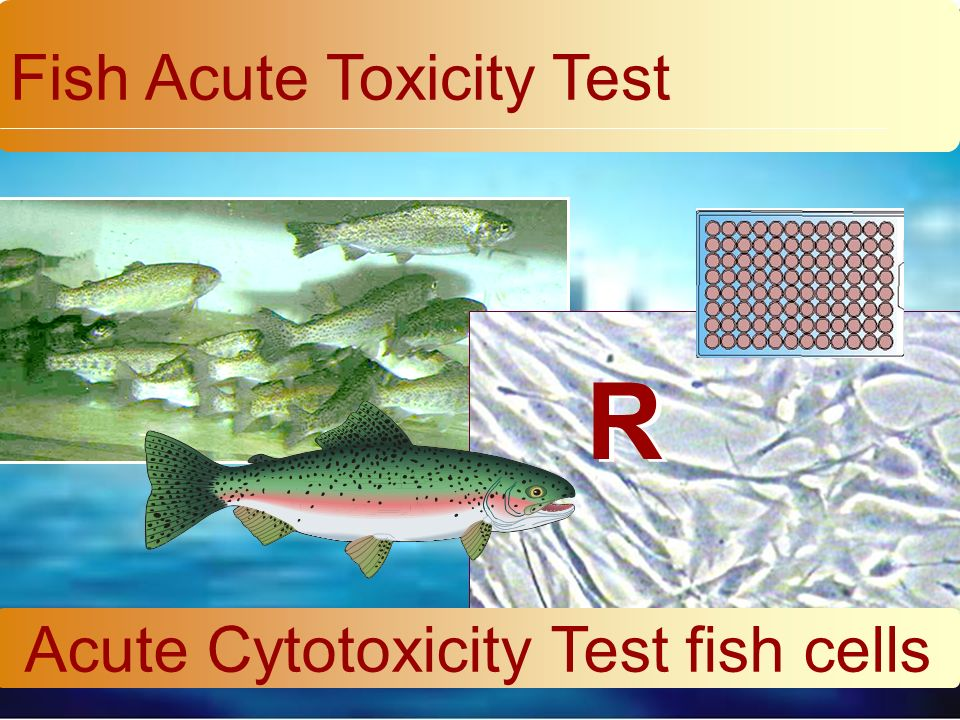 Fish Acute Toxicity Test Acute Cytotoxicity Test fish cells R R