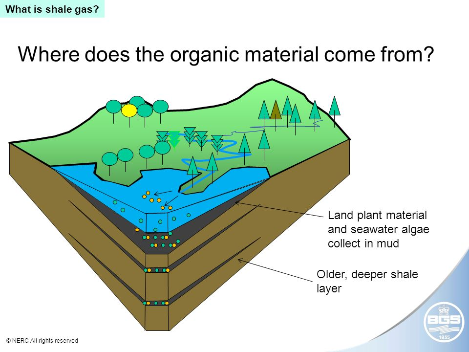 © NERC All rights reserved Where does the organic material come from.