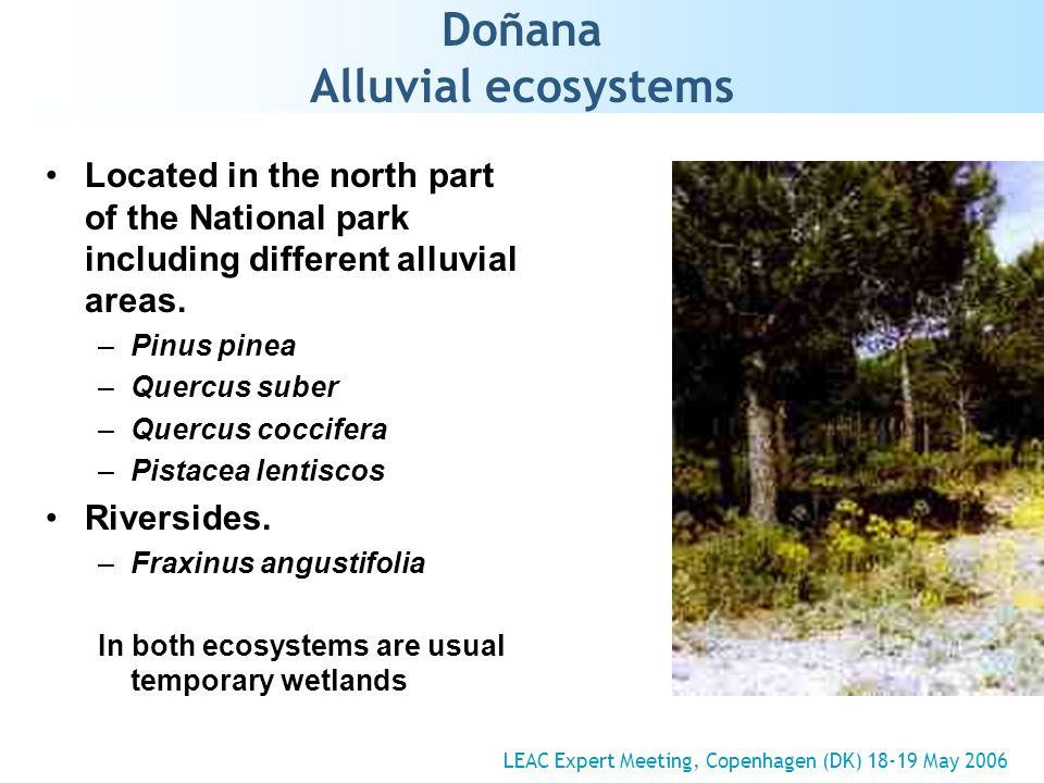 Doñana Alluvial ecosystems Located in the north part of the National park including different alluvial areas.