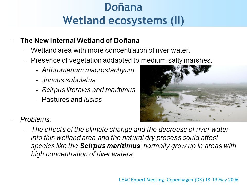 Doñana Wetland ecosystems (II) -The New Internal Wetland of Doñana -Wetland area with more concentration of river water.