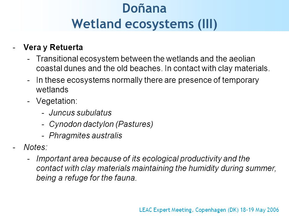 Doñana Wetland ecosystems (III) -Vera y Retuerta -Transitional ecosystem between the wetlands and the aeolian coastal dunes and the old beaches.