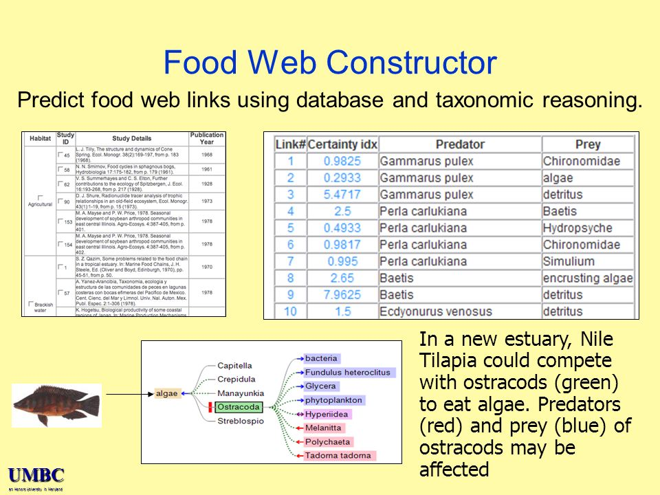 UMBC an Honors University in Maryland Food Web Constructor Predict food web links using database and taxonomic reasoning.
