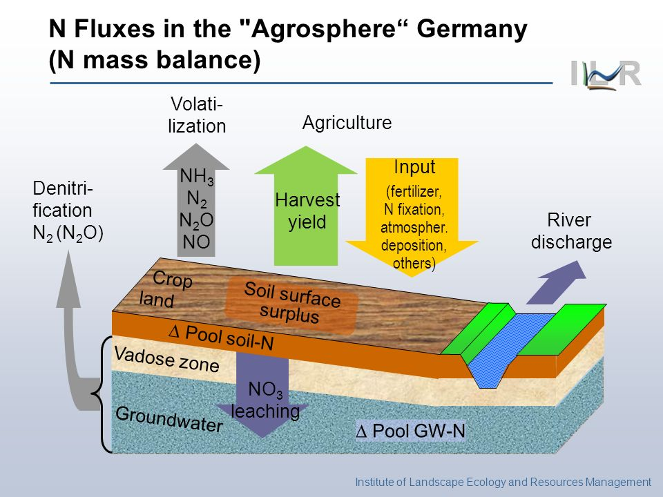 River discharge Volati- lization NH 3 N 2 N 2 O NO NO 3 leaching Pool GW-N Denitri- fication N 2 (N 2 O) N Fluxes in the Agrosphere Germany (N mass balance) Pool soil-N Input (fertilizer, N fixation, atmospher.