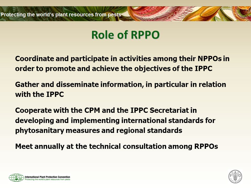 Role of RPPO Coordinate and participate in activities among their NPPOs in order to promote and achieve the objectives of the IPPC Gather and disseminate information, in particular in relation with the IPPC Cooperate with the CPM and the IPPC Secretariat in developing and implementing international standards for phytosanitary measures and regional standards Meet annually at the technical consultation among RPPOs