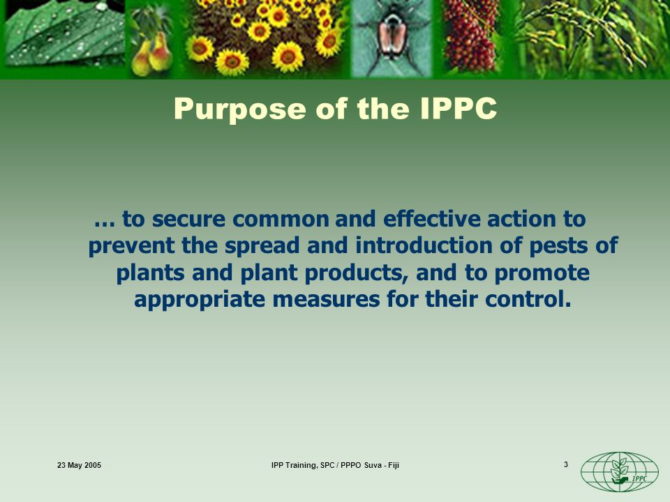 23 May 2005IPP Training, SPC / PPPO Suva - Fiji 3 Purpose of the IPPC … to secure common and effective action to prevent the spread and introduction of pests of plants and plant products, and to promote appropriate measures for their control.