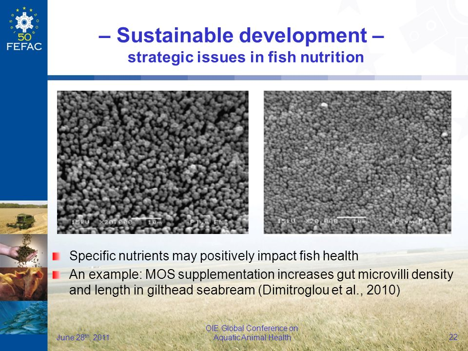 22 OIE Global Conference on Aquatic Animal Health June 28 th, 2011 Specific nutrients may positively impact fish health An example: MOS supplementation increases gut microvilli density and length in gilthead seabream (Dimitroglou et al., 2010) – Sustainable development – strategic issues in fish nutrition