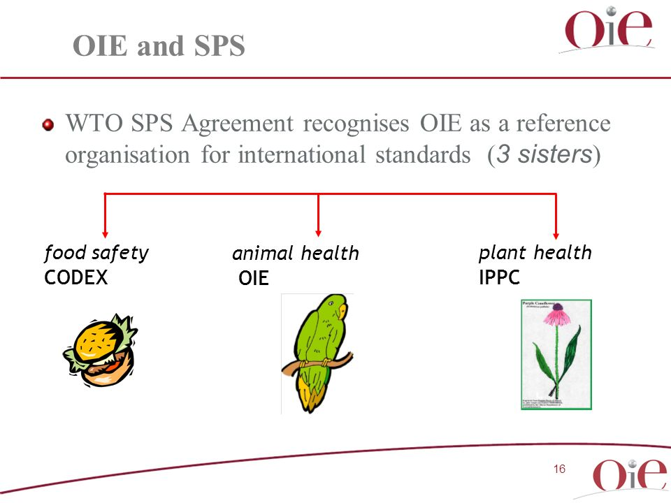 WTO SPS Agreement recognises OIE as a reference organisation for international standards ( 3 sisters ) 16 food safety CODEX animal health OIE plant health IPPC OIE and SPS