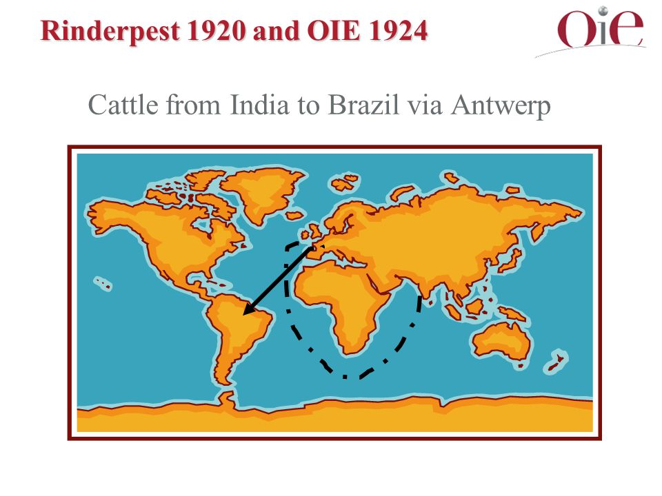 Rinderpest 1920 and OIE 1924 Cattle from India to Brazil via Antwerp
