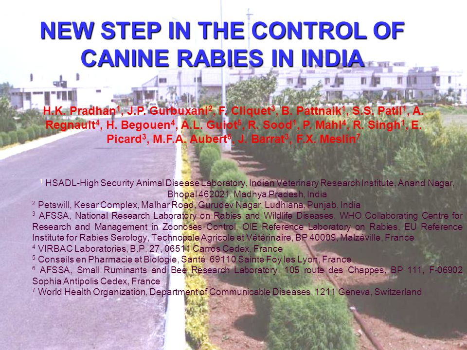 NEW STEP IN THE CONTROL OF CANINE RABIES IN INDIA 1 HSADL-High Security Animal Disease Laboratory, Indian Veterinary Research Institute, Anand Nagar, Bhopal 462021, Madhya Pradesh, India 2 Petswill, Kesar Complex, Malhar Road, Gurudev Nagar, Ludhiana, Punjab, India 3 AFSSA, National Research Laboratory on Rabies and Wildlife Diseases, WHO Collaborating Centre for Research and Management in Zoonoses Control, OIE Reference Laboratory on Rabies, EU Reference Institute for Rabies Serology, Technopole Agricole et Vétérinaire, BP 40009, Malzéville, France 4 VIRBAC Laboratories, B.P.