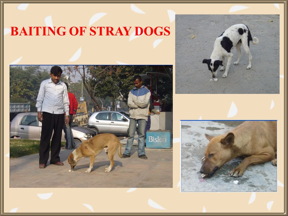 BAITING OF STRAY DOGS