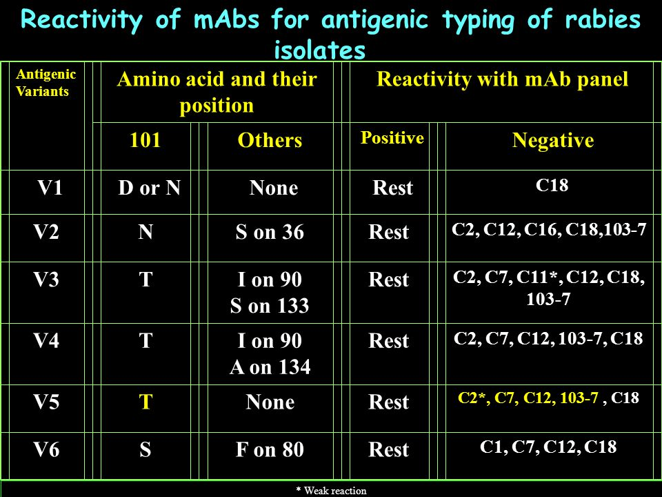Reactivity of mAbs for antigenic typing of rabies isolates Antigenic Variants Amino acid and their position Reactivity with mAb panel 101Others Positive Negative V1D or NNoneRest C18 V2NS on 36Rest C2, C12, C16, C18,103-7 V3TI on 90 S on 133 Rest C2, C7, C11*, C12, C18, 103-7 V4TI on 90 A on 134 Rest C2, C7, C12, 103-7, C18 V5TNoneRest C2*, C7, C12, 103-7, C18 V6SF on 80Rest C1, C7, C12, C18 * Weak reaction
