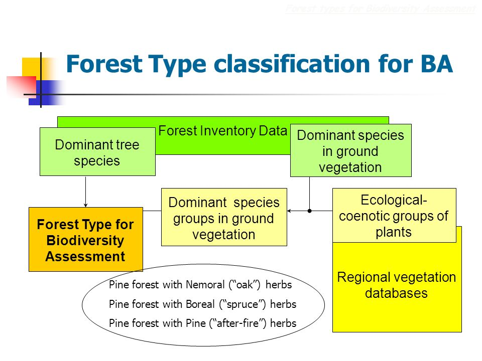 Forest Type classification for BA Forest types for Biodiversity Assessment Regional vegetation databases Forest Type for Biodiversity Assessment Ecological- coenotic groups of plants Forest Inventory Data Dominant tree species Dominant species in ground vegetation Dominant species groups in ground vegetation Pine forest with Nemoral (oak) herbs Pine forest with Boreal (spruce) herbs Pine forest with Pine (after-fire) herbs