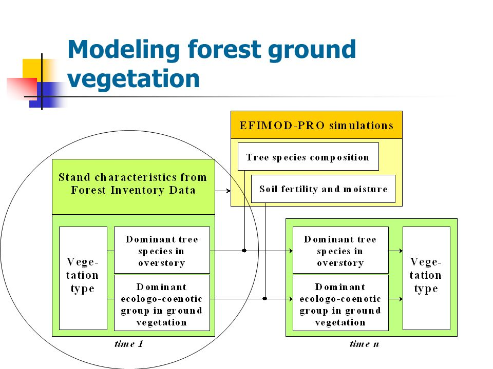 Modeling forest ground vegetation