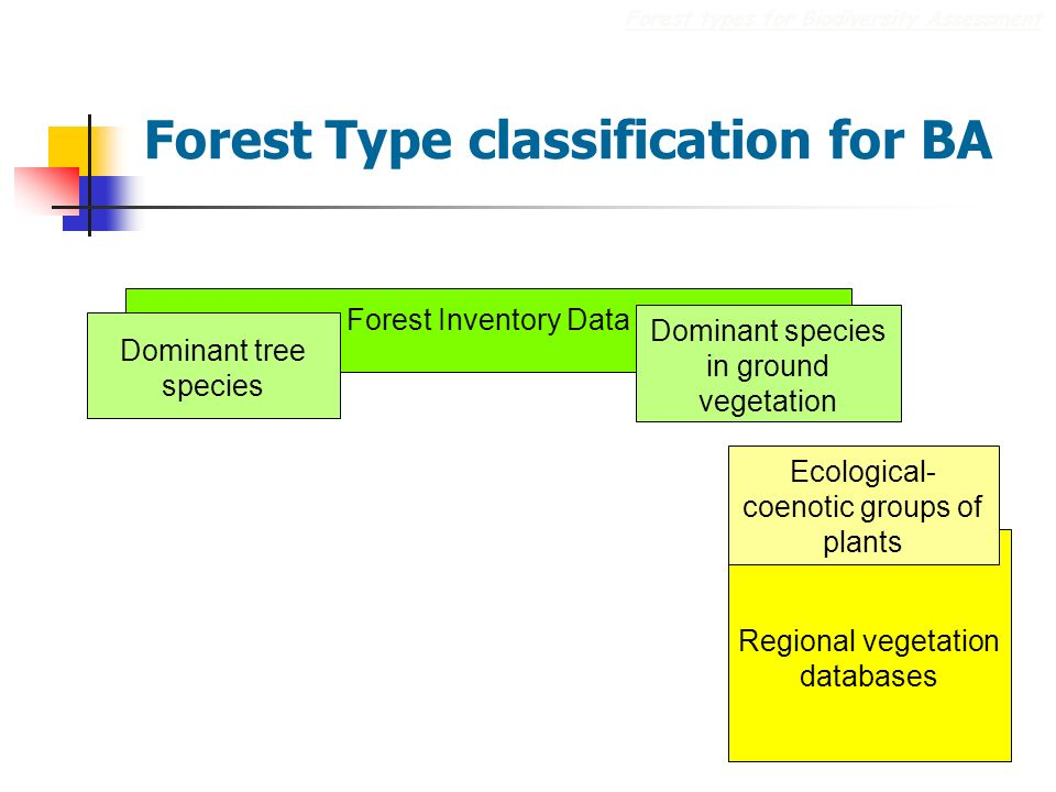 Regional vegetation databases Forest Type classification for BA Forest types for Biodiversity Assessment Ecological- coenotic groups of plants Forest Inventory Data Dominant tree species Dominant species in ground vegetation