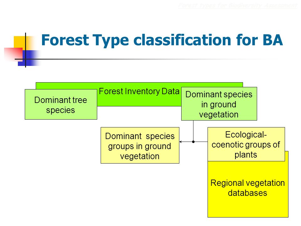 Regional vegetation databases Forest Type classification for BA Forest types for Biodiversity Assessment Ecological- coenotic groups of plants Forest Inventory Data Dominant tree species Dominant species in ground vegetation Dominant species groups in ground vegetation