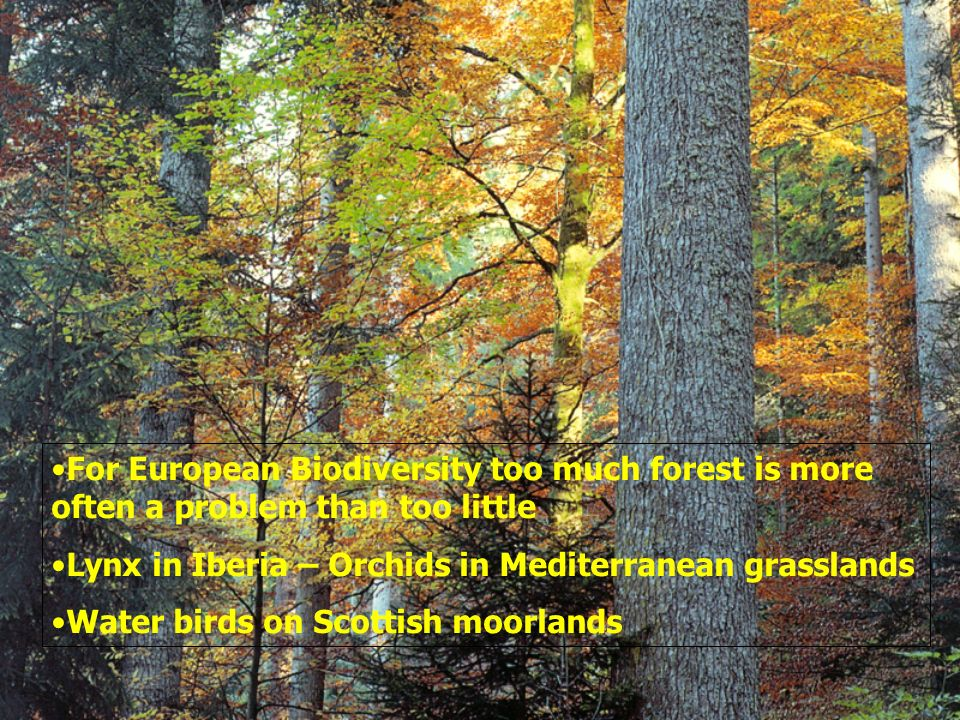 For European Biodiversity too much forest is more often a problem than too little Lynx in Iberia – Orchids in Mediterranean grasslands Water birds on Scottish moorlands