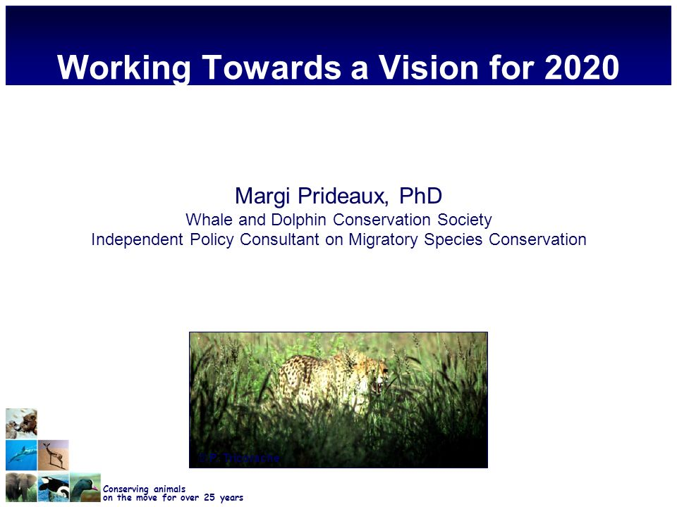 Conserving animals on the move for over 25 years Working Towards a Vision for 2020 Margi Prideaux, PhD Whale and Dolphin Conservation Society Independent Policy Consultant on Migratory Species Conservation © P.