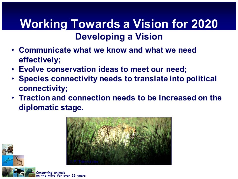 Conserving animals on the move for over 25 years Working Towards a Vision for 2020 Developing a Vision Communicate what we know and what we need effectively; Evolve conservation ideas to meet our need; Species connectivity needs to translate into political connectivity; Traction and connection needs to be increased on the diplomatic stage.