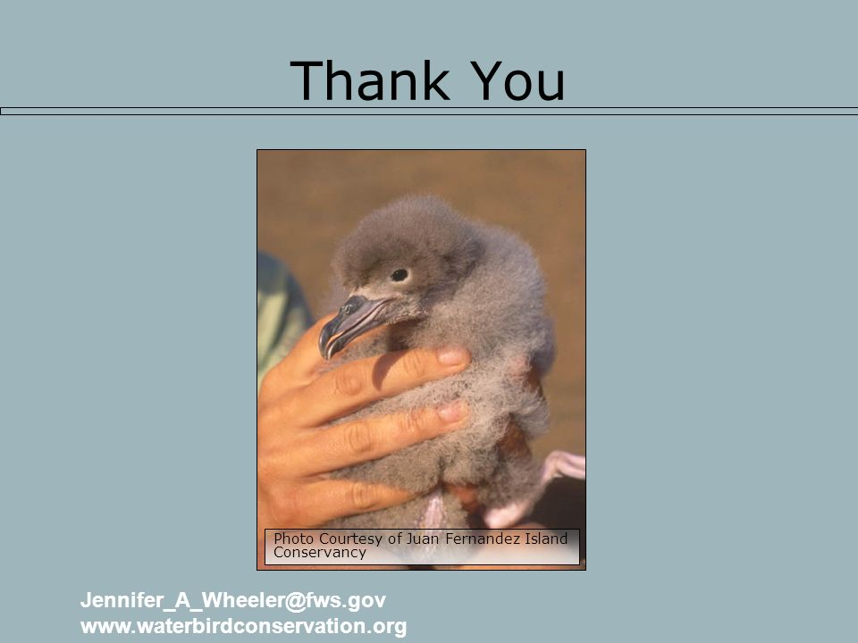 Thank You Photo Courtesy of Juan Fernandez Island Conservancy Jennifer_A_Wheeler@fws.gov www.waterbirdconservation.org