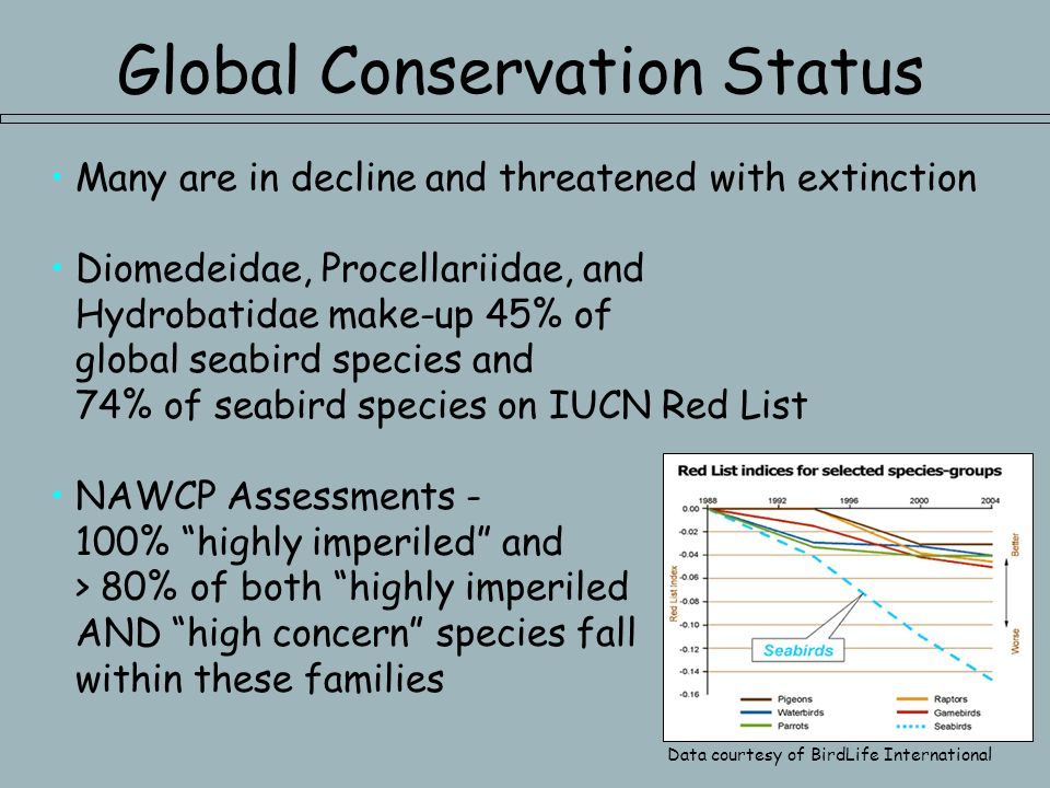 Global Conservation Status Many are in decline and threatened with extinction Diomedeidae, Procellariidae, and Hydrobatidae make-up 45% of global seabird species and 74% of seabird species on IUCN Red List NAWCP Assessments - 100% highly imperiled and > 80% of both highly imperiled AND high concern species fall within these families Data courtesy of BirdLife International