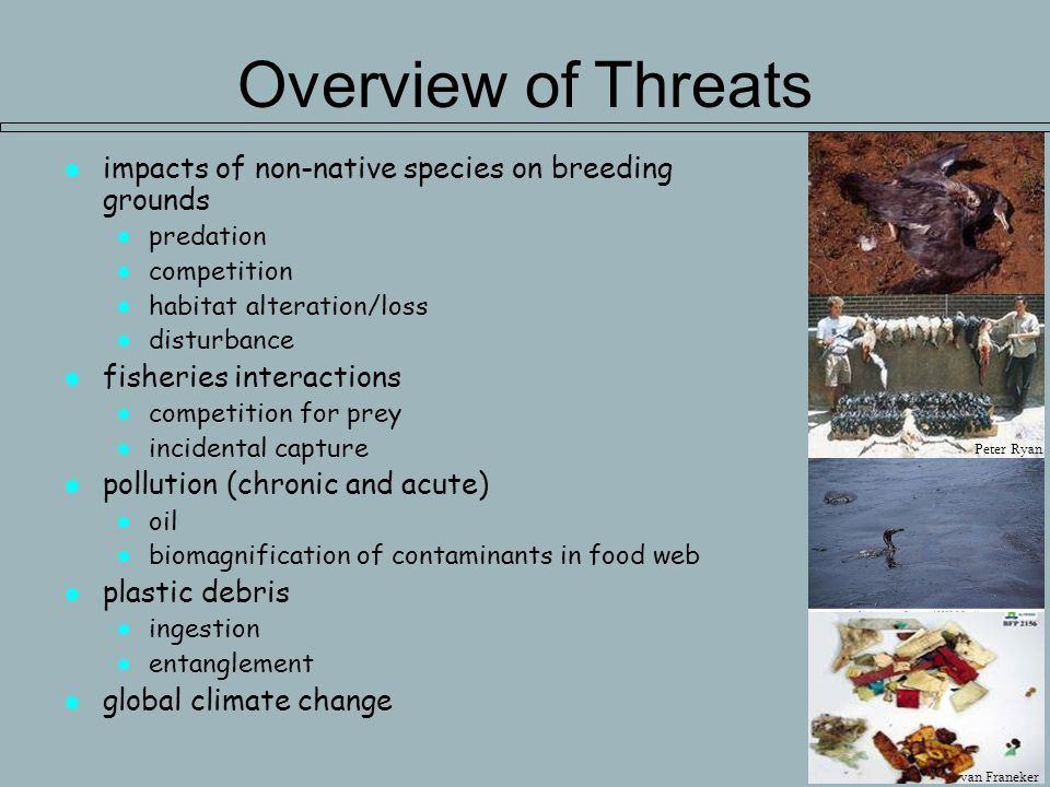 Overview of Threats impacts of non-native species on breeding grounds predation competition habitat alteration/loss disturbance fisheries interactions competition for prey incidental capture pollution (chronic and acute) oil biomagnification of contaminants in food web plastic debris ingestion entanglement global climate change Peter Ryan van Franeker