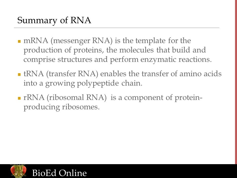 www.BioEdOnline.org BioEd Online Summary of RNA mRNA (messenger RNA) is the template for the production of proteins, the molecules that build and comprise structures and perform enzymatic reactions.
