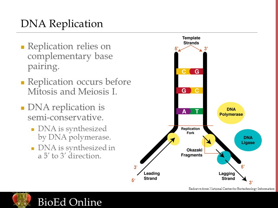 www.BioEdOnline.org BioEd Online DNA Replication Replication relies on complementary base pairing.