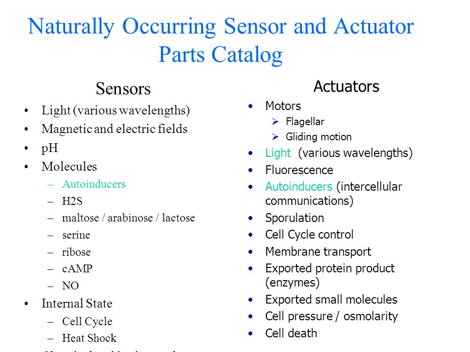 Naturally Occurring Sensor and Actuator Parts Catalog Sensors Light (various wavelengths) Magnetic and electric fields pH Molecules –Autoinducers –H2S –maltose / arabinose / lactose –serine –ribose –cAMP –NO Internal State –Cell Cycle –Heat Shock Chemical and ionic membrane potentials Actuators Motors Flagellar Gliding motion Light (various wavelengths) Fluorescence Autoinducers (intercellular communications) Sporulation Cell Cycle control Membrane transport Exported protein product (enzymes) Exported small molecules Cell pressure / osmolarity Cell death