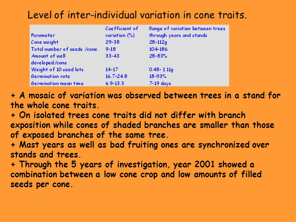 Level of inter-individual variation in cone traits.