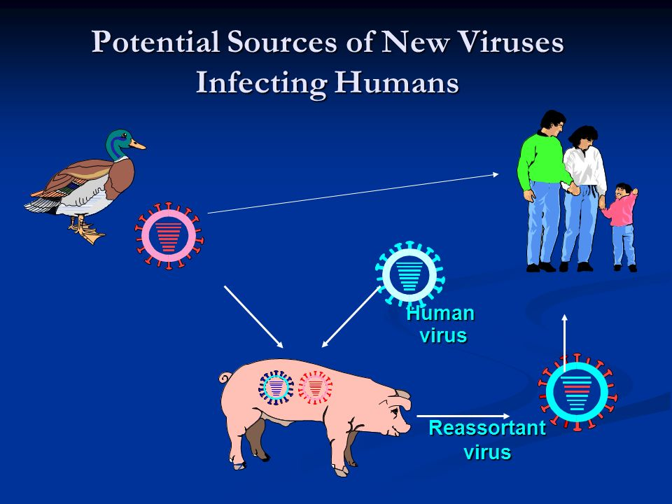 Potential Sources of New Viruses Infecting Humans Human virus virus Reassortantvirus Diagram source: Ben Schwartz; National Vaccine Program