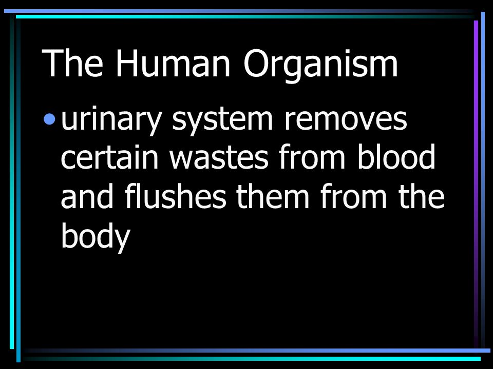 The Human Organism urinary system removes certain wastes from blood and flushes them from the body