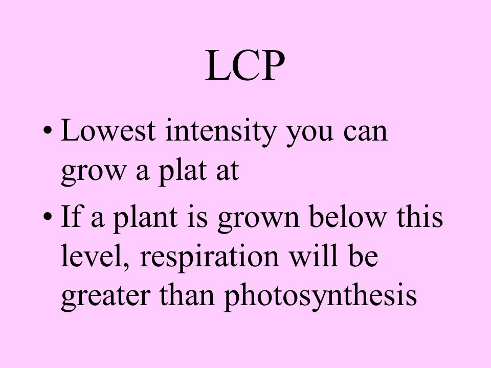 Light Light Compensation Point - LCP light intensity where rate of photosynthesis = the rate of respiration