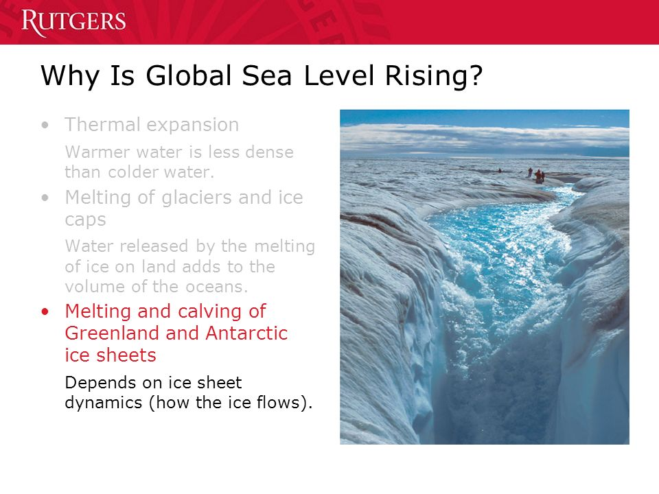Why Is Global Sea Level Rising. Thermal expansion Warmer water is less dense than colder water.