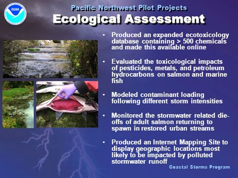 Produced an expanded ecotoxicology database containing > 500 chemicals and made this available online Evaluated the toxicological impacts of pesticides, metals, and petroleum hydrocarbons on salmon and marine fish Modeled contaminant loading following different storm intensities Monitored the stormwater related die- offs of adult salmon returning to spawn in restored urban streams Produced an Internet Mapping Site to display geographic locations most likely to be impacted by polluted stormwater runoff Produced an expanded ecotoxicology database containing > 500 chemicals and made this available online Evaluated the toxicological impacts of pesticides, metals, and petroleum hydrocarbons on salmon and marine fish Modeled contaminant loading following different storm intensities Monitored the stormwater related die- offs of adult salmon returning to spawn in restored urban streams Produced an Internet Mapping Site to display geographic locations most likely to be impacted by polluted stormwater runoff Ecological Assessment Pacific Northwest Pilot Projects Ecological Assessment Coastal Storms Program