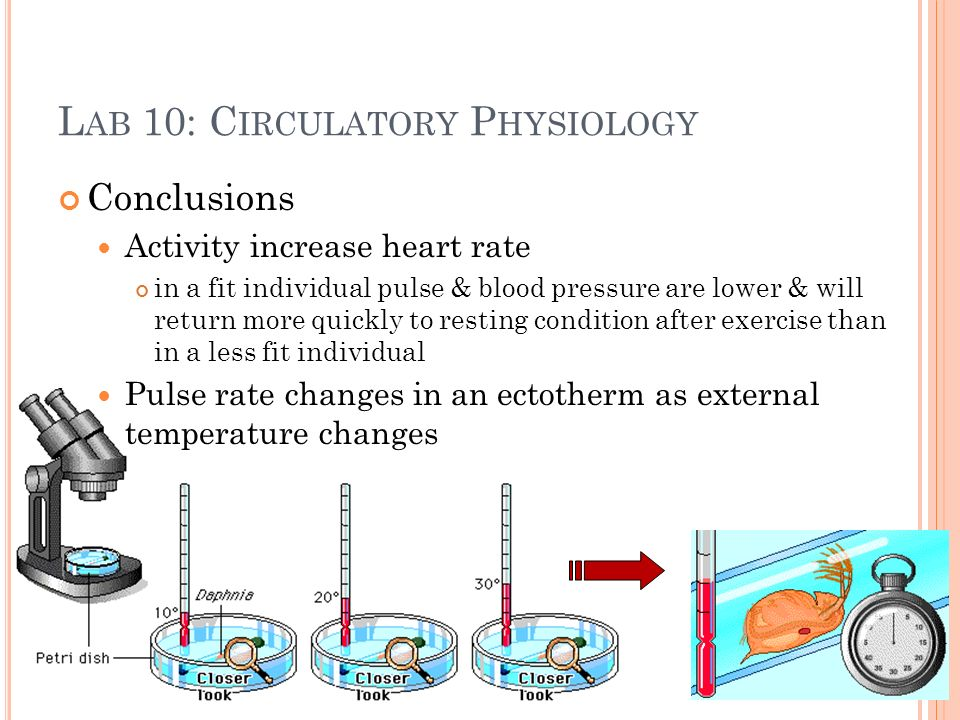 L AB 10: C IRCULATORY P HYSIOLOGY Conclusions Activity increase heart rate in a fit individual pulse & blood pressure are lower & will return more quickly to resting condition after exercise than in a less fit individual Pulse rate changes in an ectotherm as external temperature changes