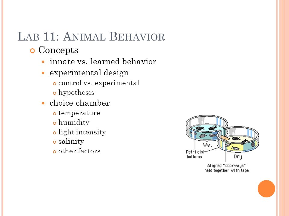 L AB 11: A NIMAL B EHAVIOR Concepts innate vs. learned behavior experimental design control vs.
