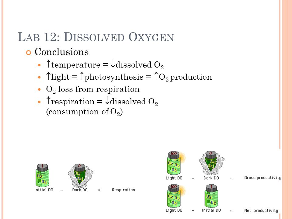 L AB 12: D ISSOLVED O XYGEN Conclusions temperature = dissolved O 2 light = photosynthesis = O 2 production O 2 loss from respiration respiration = dissolved O 2 (consumption of O 2 )