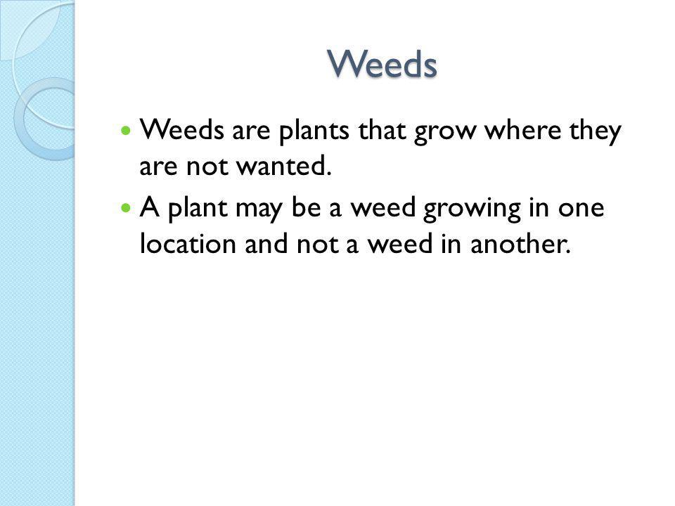 Weeds Weeds are plants that grow where they are not wanted.