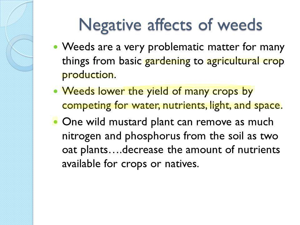 Negative affects of weeds Weeds are a very problematic matter for many things from basic gardening to agricultural crop production.