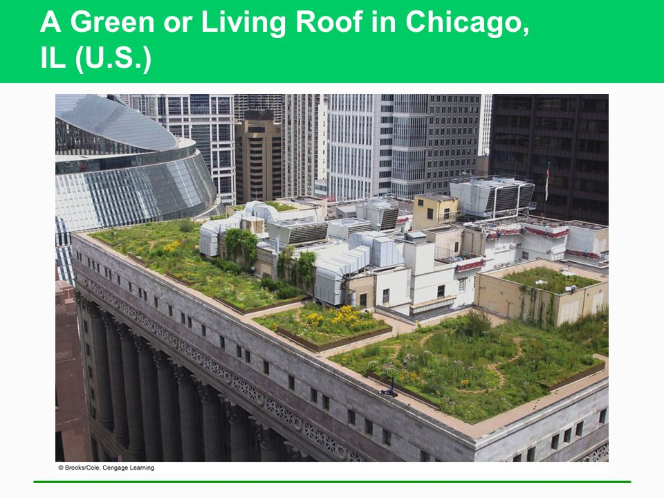 A Green or Living Roof in Chicago, IL (U.S.)