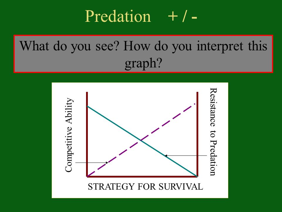 Predation + / - What do you see. How do you interpret this graph.