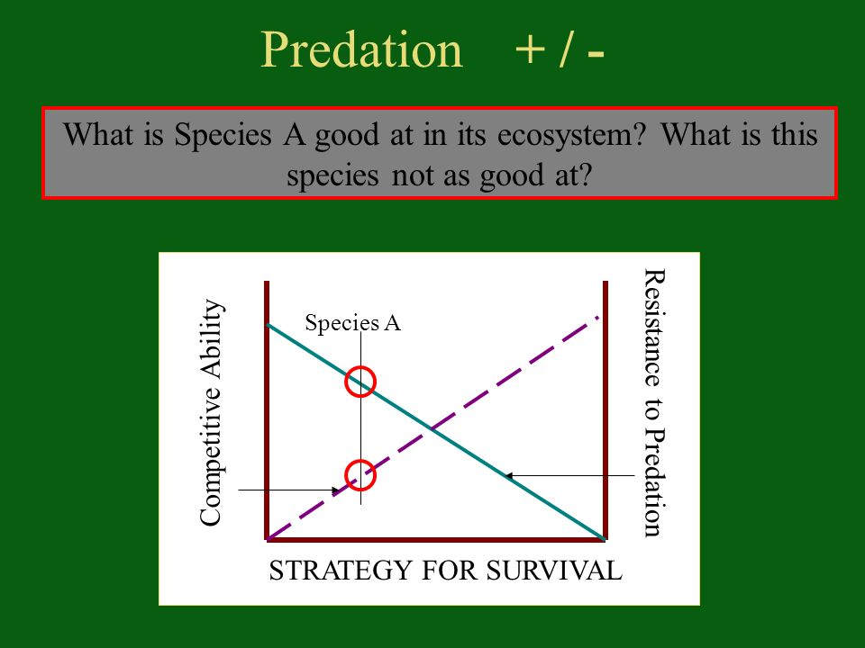 Predation + / - What is Species A good at in its ecosystem.