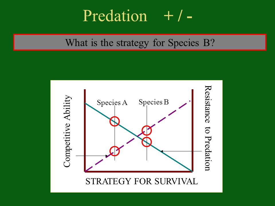 Predation + / - STRATEGY FOR SURVIVAL Competitive Ability Resistance to Predation Species A Species B What is the strategy for Species B