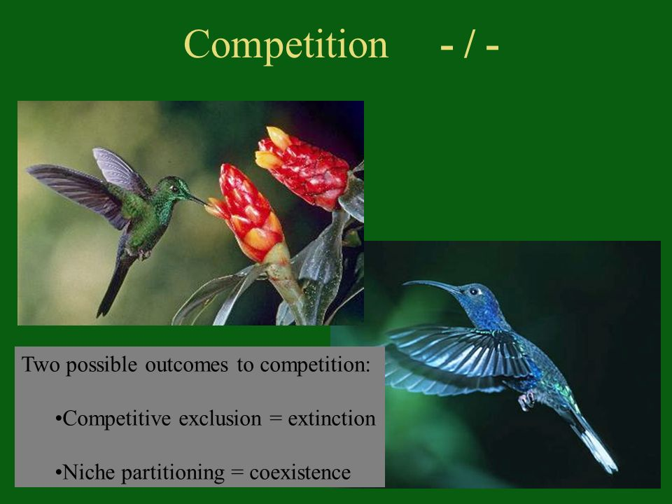 Two possible outcomes to competition: Competitive exclusion = extinction Niche partitioning = coexistence