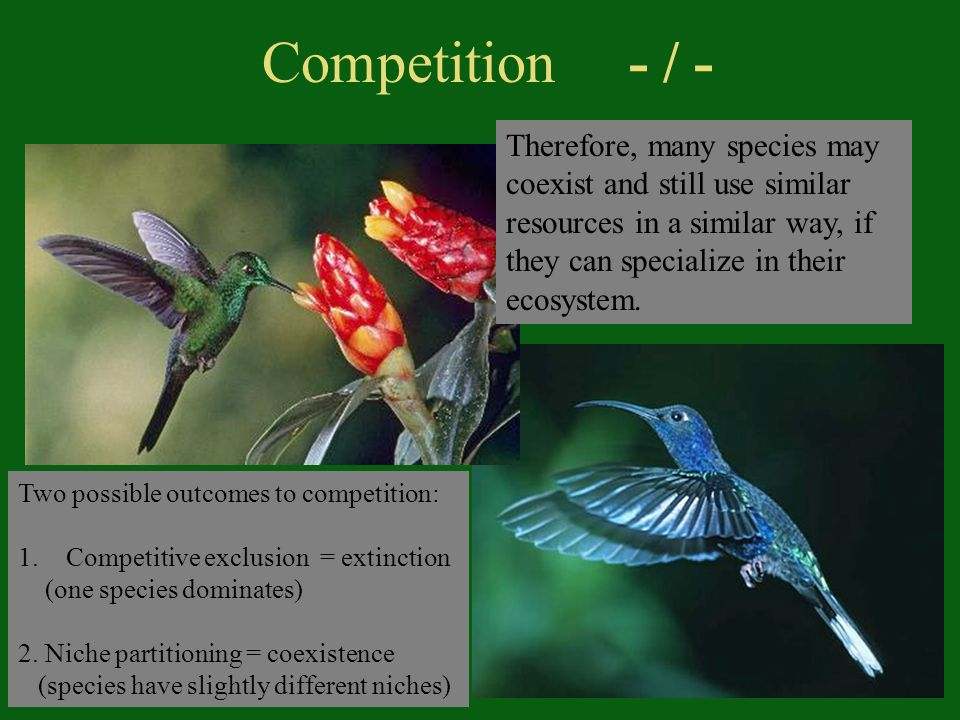 Competition - / - Two possible outcomes to competition: 1.Competitive exclusion = extinction (one species dominates) 2.