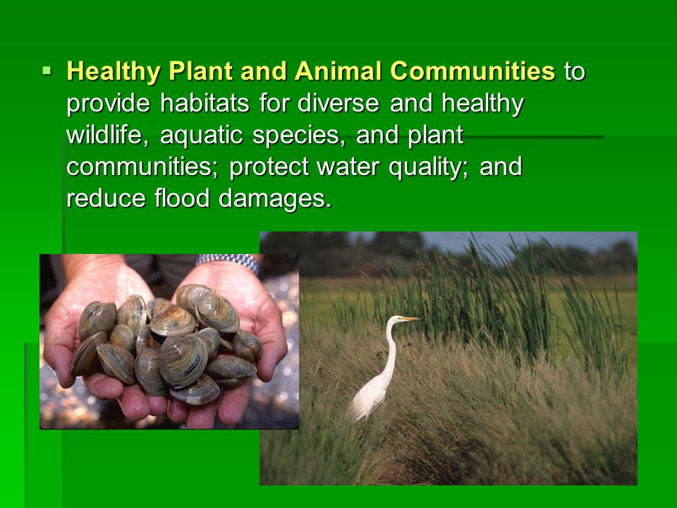 Healthy Plant and Animal Communities to provide habitats for diverse and healthy wildlife, aquatic species, and plant communities; protect water quality; and reduce flood damages.