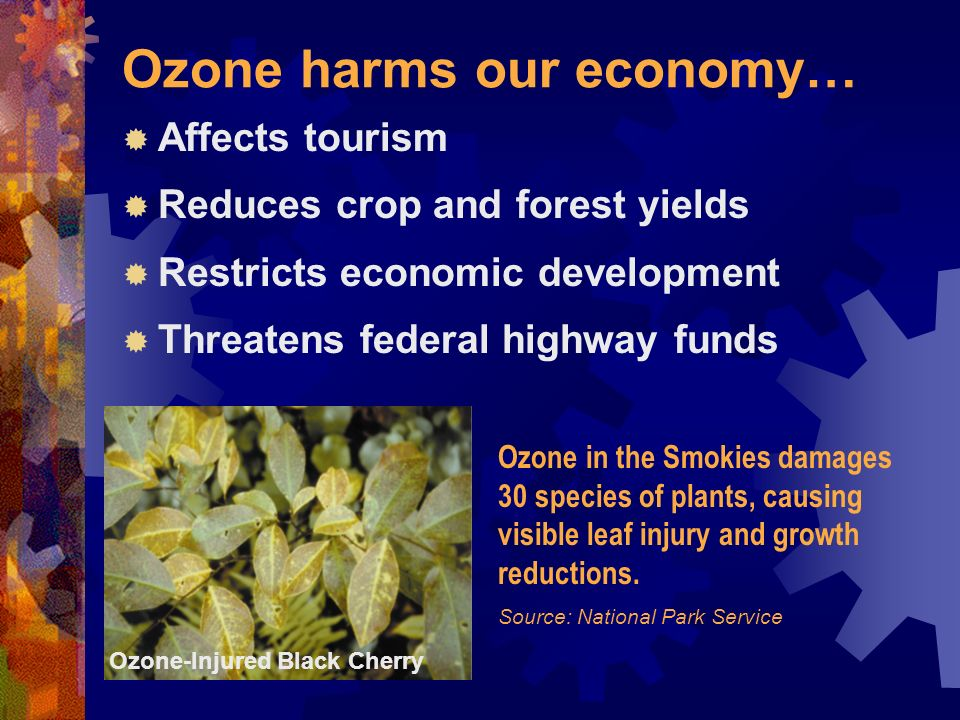 Ozone harms our economy… Affects tourism Reduces crop and forest yields Restricts economic development Threatens federal highway funds Ozone in the Smokies damages 30 species of plants, causing visible leaf injury and growth reductions.