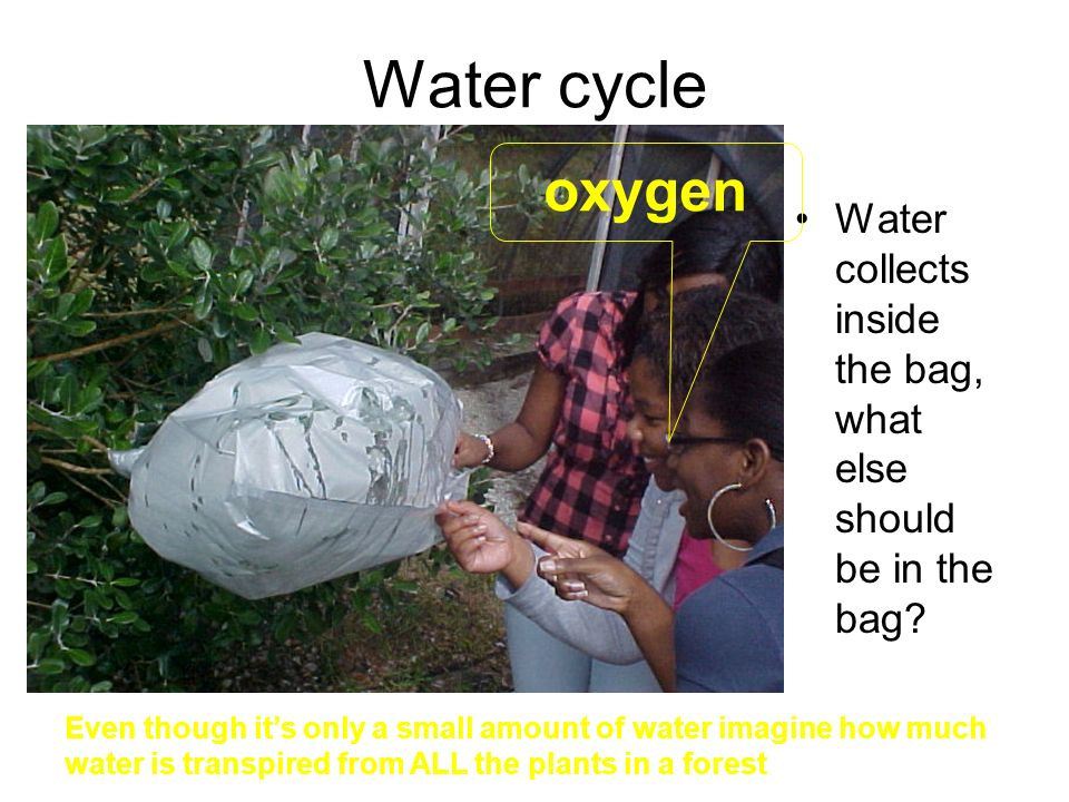 Water cycle Water collects inside the bag, what else should be in the bag.