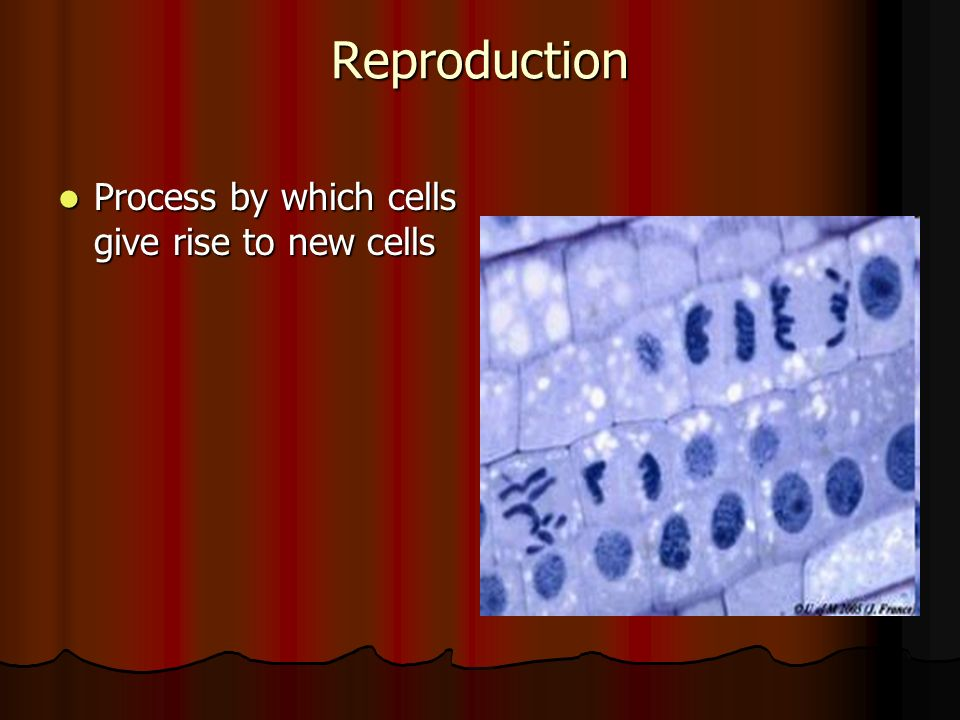 Reproduction Process by which cells give rise to new cells Process by which cells give rise to new cells